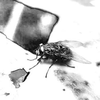 Beat mit der Fliege